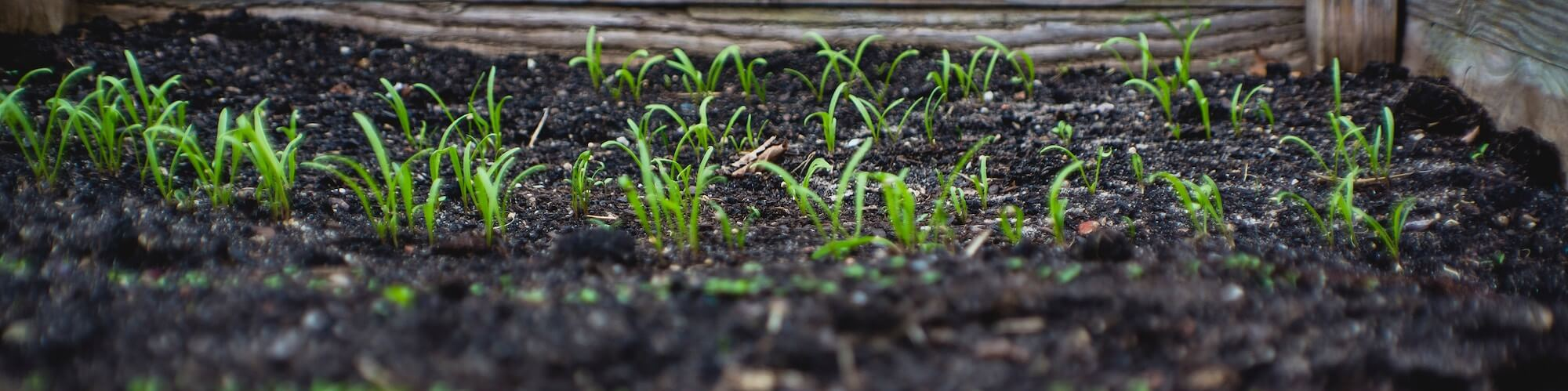 Kansas City Gardening Consultations